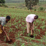 Civil society demands better budget allocation for agriculture